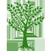 Olive cultivars
