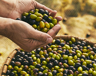 Nel 1867 Filippo Berio iniziò a produrre olio di oliva degno dei suoi  familiari e amici. A garanzia della qualità e della sua passione e6bcb968c4f